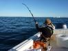 70 minute fight w/Bluefin Tuna