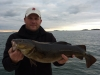 1st Cod of the Season caught on Crab