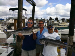 Striper & Bluefish Blitz
